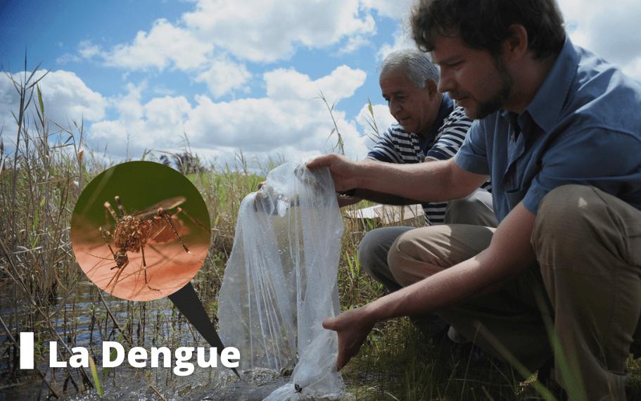 dengue voyage pasteur lille